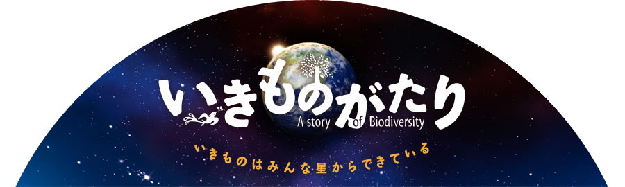 biodiversity story Biodiversity, a portmanteau of bio (life) and diversity, generally refers to the variety and variability of life on earth according to the united nations.