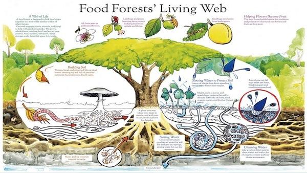 シアトル発 パーマカルチャーで育む「食べものの森」がコミュニ...